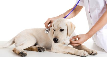 Vétérinaire Lienard – Vétérinaire